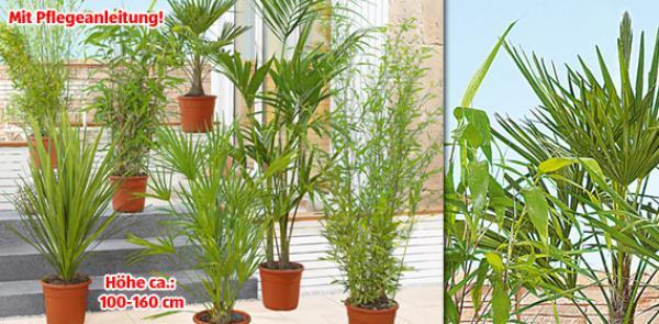 palme oder bambus von aldi s d ansehen