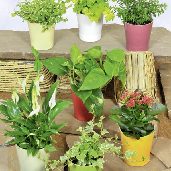 bl h und rankpflanzen von aldi nord ansehen. Black Bedroom Furniture Sets. Home Design Ideas