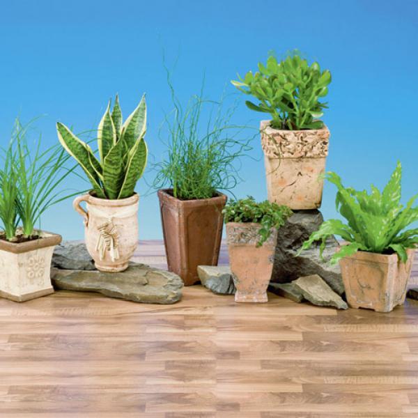 pflanzen mix spezial in trendkeramik von aldi nord ansehen. Black Bedroom Furniture Sets. Home Design Ideas