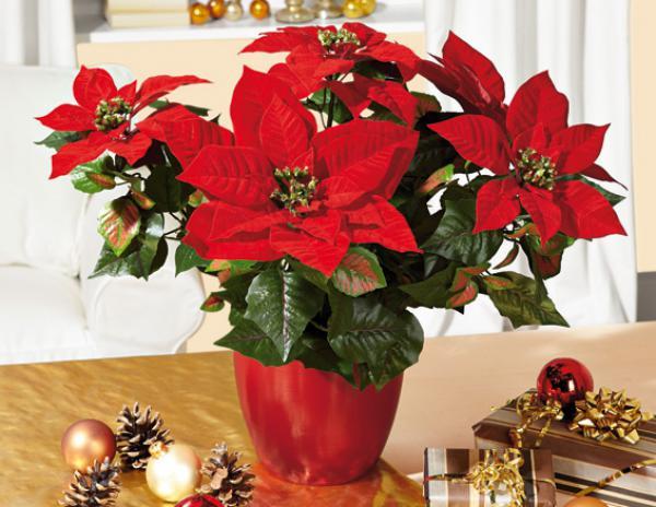 Deko weihnachtsstern von lidl ansehen for Dekoration angebote