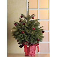 echter weihnachtsbaum fichte tanne von ansehen. Black Bedroom Furniture Sets. Home Design Ideas