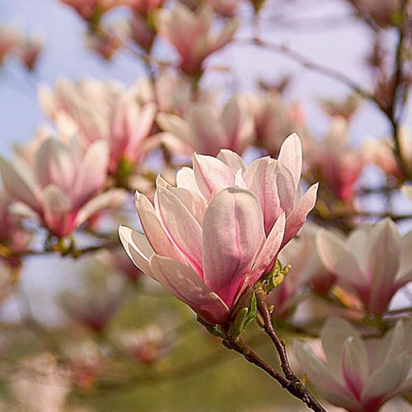 magnolie von aldi nord ansehen. Black Bedroom Furniture Sets. Home Design Ideas