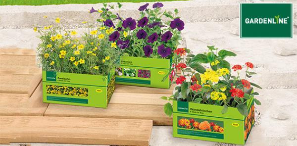 gardenline balkon und k belpflanzen von aldi s d ansehen. Black Bedroom Furniture Sets. Home Design Ideas