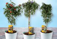 terrassenpflanzen von norma ansehen. Black Bedroom Furniture Sets. Home Design Ideas