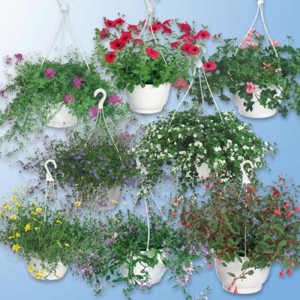 Ampelpflanzen von aldi nord ansehen for Plante en suspension exterieur