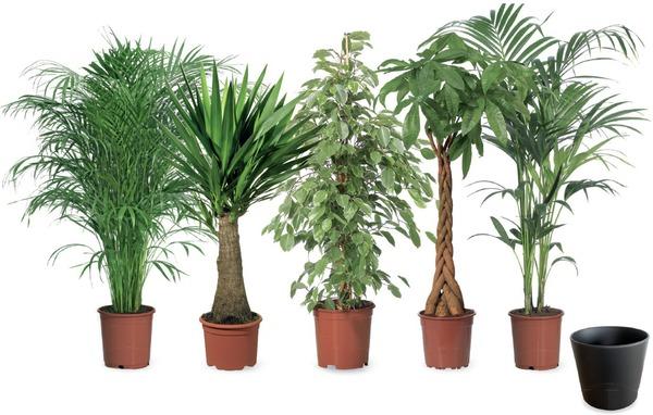 Gro pflanzen von toom ansehen - Zimmerpflanzen sonniger standort ...