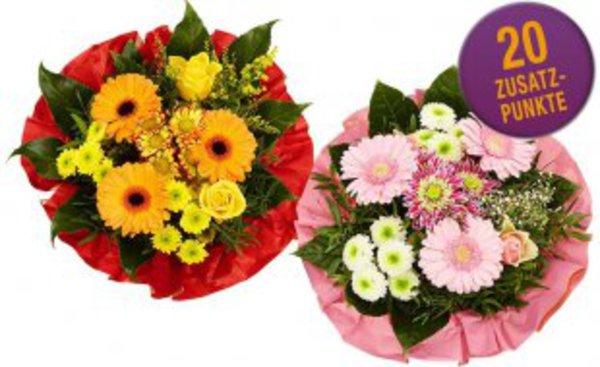 Netto Blumen Angebote Regaine Für Frauen Angebote