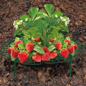 Erdbeer-Reifer 5er-Set