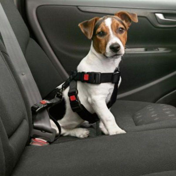 Angebote von Hunde Sicherheit
