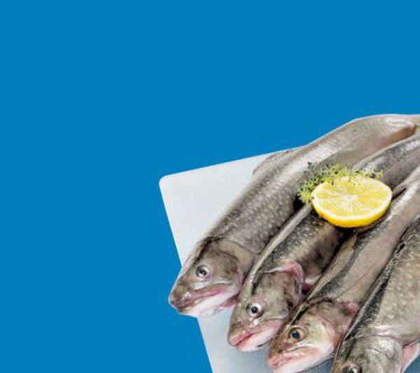 Edeka Fisch Angebot Discount Brokerage Canada Fees