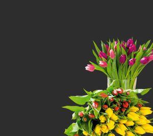 Tulpenstrauss Harlekin