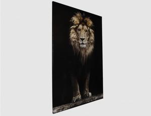 Bild König der Tiere