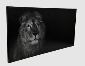 Bild Löwe