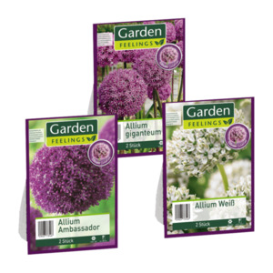GARDEN FEELINGS Allium Selektion