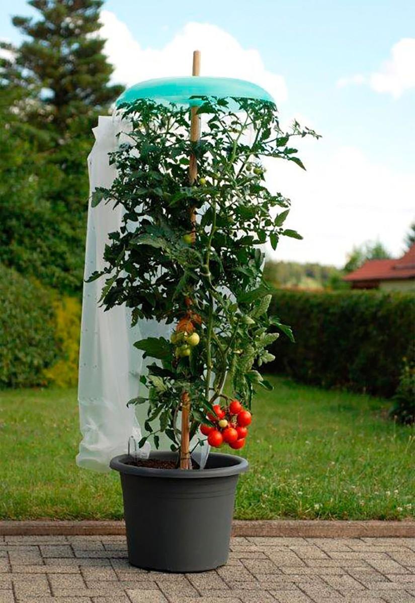 Bild 1 von KHW Starter Set Tomatenhut