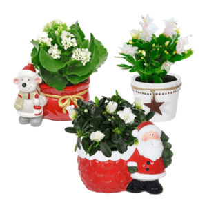 GARDEN FEELINGS Nikolaus-Mix