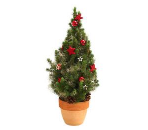 Weihnachtsbäumchen im Terrakottatopf