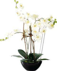 Orchideentopf ´´Modern´´