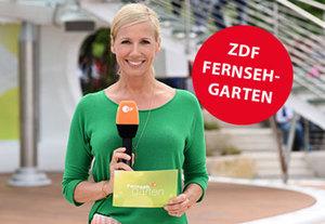 Deutschland - Mainz  Favored Hotel Hansa Wiesbaden inkl. ZDF-Fernsehgarten