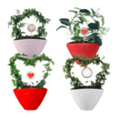 Bild 1 von GARDEN FEELINGS   Valentinstag-Arrangement
