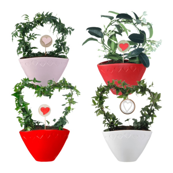 GARDEN FEELINGS   Valentinstag-Arrangement