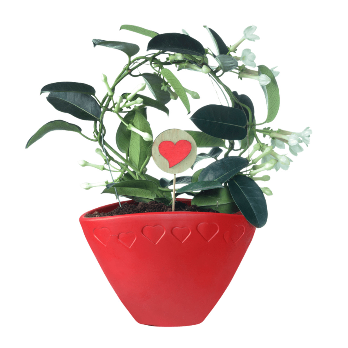 Bild 3 von GARDEN FEELINGS   Valentinstag-Arrangement