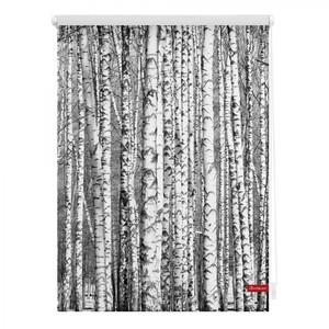 Lichtblick Rollo Klemmfix, ohne Bohren, blickdicht, Birken - Schwarz Weiß, 90 x 150 cm (B x L)