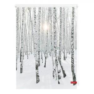 Lichtblick Rollo Klemmfix, ohne Bohren, blickdicht, Birkenwald - Weiß, 80 x 150 cm (B x L)
