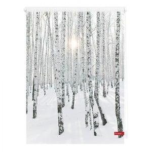 Lichtblick Rollo Klemmfix, ohne Bohren, blickdicht, Birkenwald - Weiß, 60 x 150 cm (B x L)