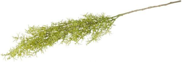 Asparaguszweig - aus Kunststoff - 79 cm