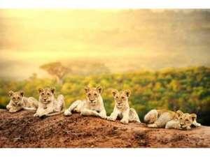 Rundreise - Simbabwe, Botswana, Namibia, Südafrika