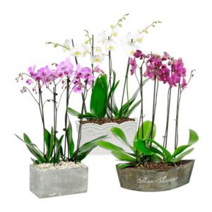 GARDEN FEELINGS     Orchideen-Arrangement