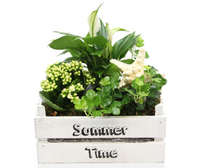 GARDENLINE®  Pflanzenarrangement Maritim