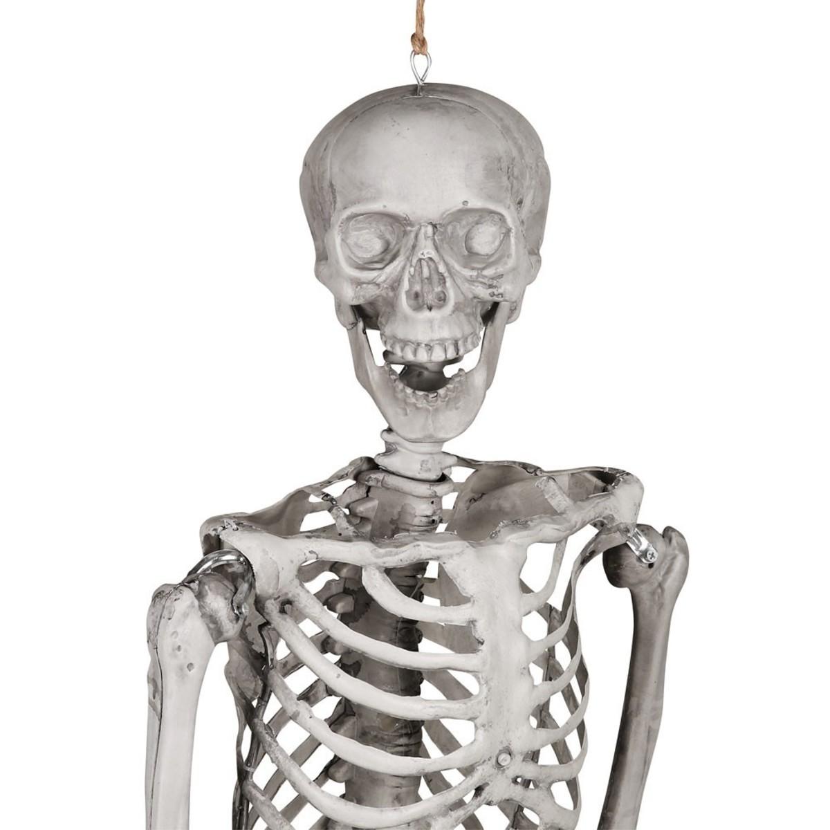 Bild 1 von Großes Halloween Skelett