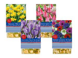 Holländische Blumenzwiebeln