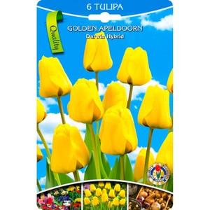 Blumenzwiebeln Tulpen Darwin Hybrid Gelb 6 Stück