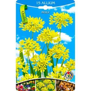 Blumenzwiebeln Goldlauch Alium Moly goldgelb 15 Stück