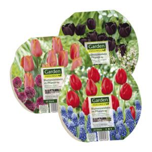 GARDEN FEELINGS     Blumenzwiebeln im Pflanztray
