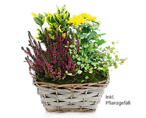 GARDENLINE®  Bepflanztes Holzgefäß, Korb oder Zink-Topf