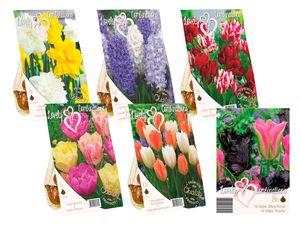 Blumenzwiebeln Mix Farbkombinationen