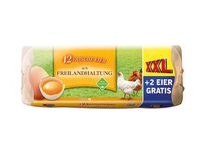 Frische Eier aus Freilandhaltung XXL