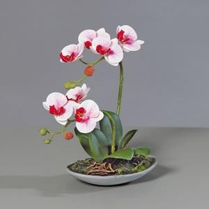 Orchidee Phalaenopsis Pink ca. Ø 30 cm