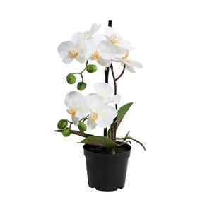 Orchidee im Topf 35 cm