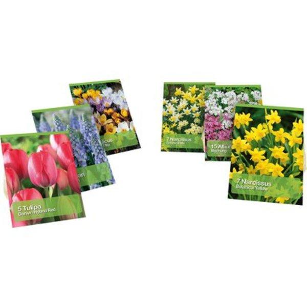 Blumenzwiebel-Mix verschiedene Sorten