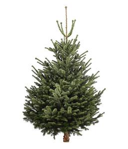 weihnachtsbaum angebote von dehner. Black Bedroom Furniture Sets. Home Design Ideas
