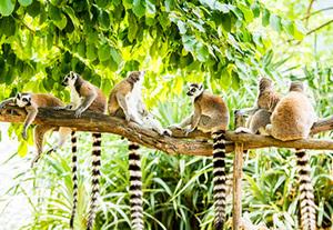 Madagaskar & Nosy Be Rundreise & Baden  Wo der Pfeffer wächst