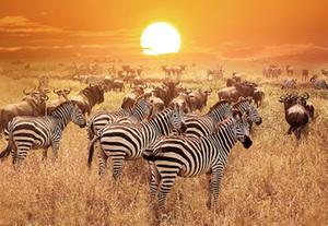 Tansania und Kenia Rundreise & Baden  Tierwelt & Traumstrände