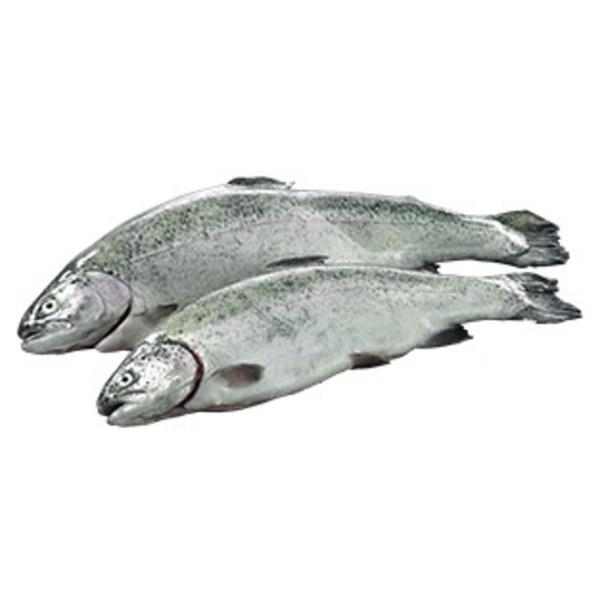Lachsforelle küchenfertig ausgenommen, Aquakultur, Deutschland,  je 100 g