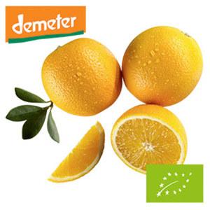 Spanien/Italien Orangen, Kennzeichnung siehe Etikett, jedes 1-kg-Netz