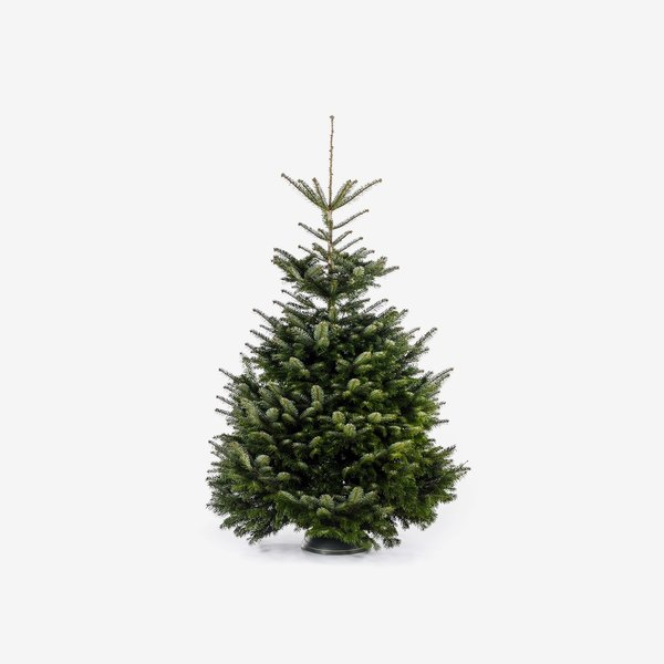 Weihnachtsbaum Nordmanntanne.Toomeigenmarken Fair Trees Weihnachtsbaum Nordmanntanne Gesägt 150 190 Cm Von Toom